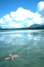 Pacific Rim National Park Reserve, Vancouver Island ... | 181 x 272 jpeg 13kB